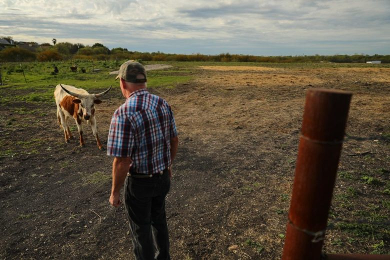 Randy Chandley tends to his cattle on the Centro church land he manages.