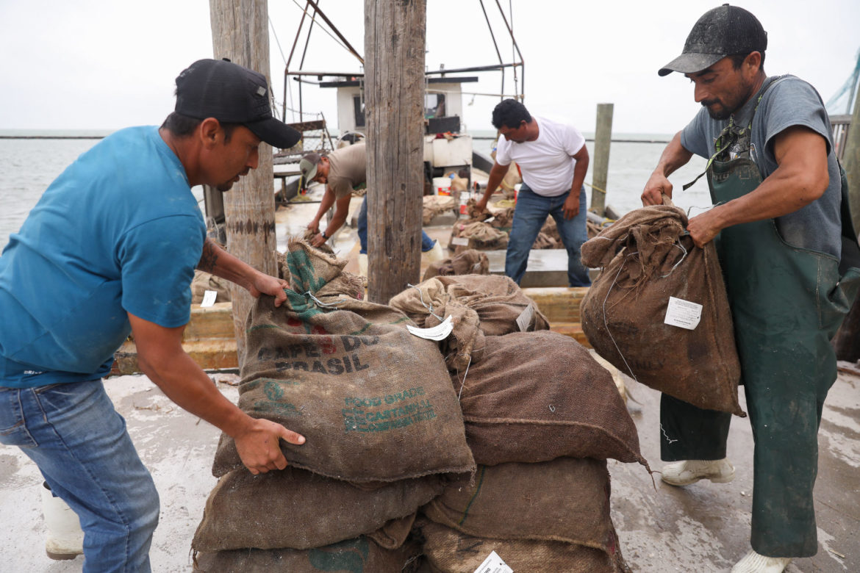 Oyster harvesters unload sacks of the popular food along the Rockport bay.