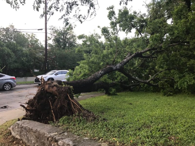 A tree fell down after the hail storm at the intersection of Main Avenue.