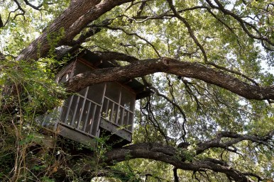 Large live oak trees surround the property including one that has a professionally built treehouse.