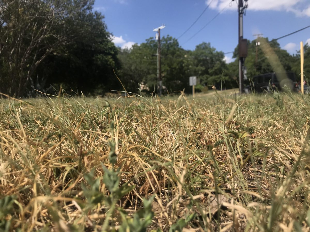 Brown grass in Monte Vista reflects prolonged dry weather as San Antonio enters Stage 1 drought restrictions.