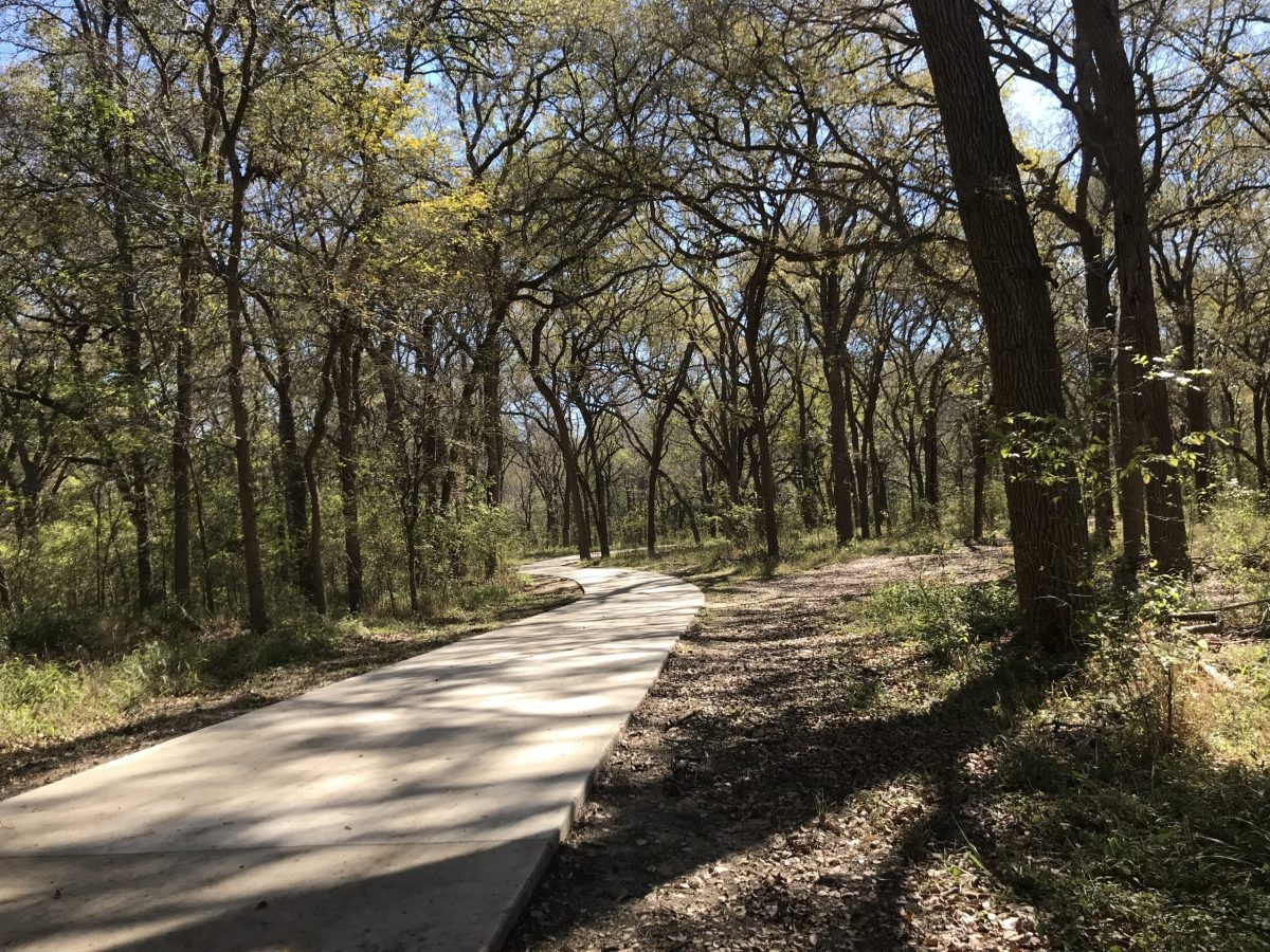 The Medina River Greenway trail passes underneath towering pecans in a bottomland forest near the Medina River.
