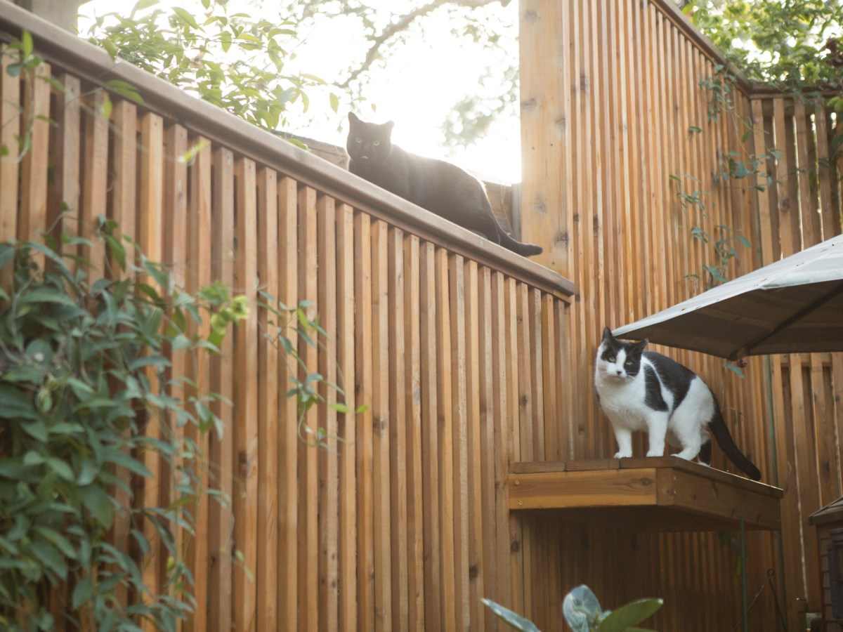Shadow and Stella sit in Ben Cardinale's backyard, expecting food.