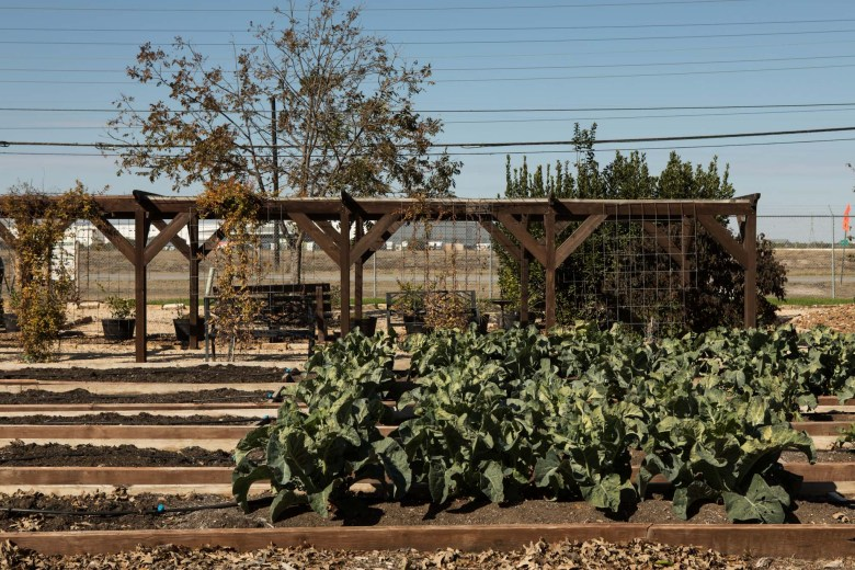 San Antonio Food Bank's campus features aquaponic gardens, food plots, goats and other animals used in student education programs, rain harvesting tanks, and many acres of farmed greens and vegetables.