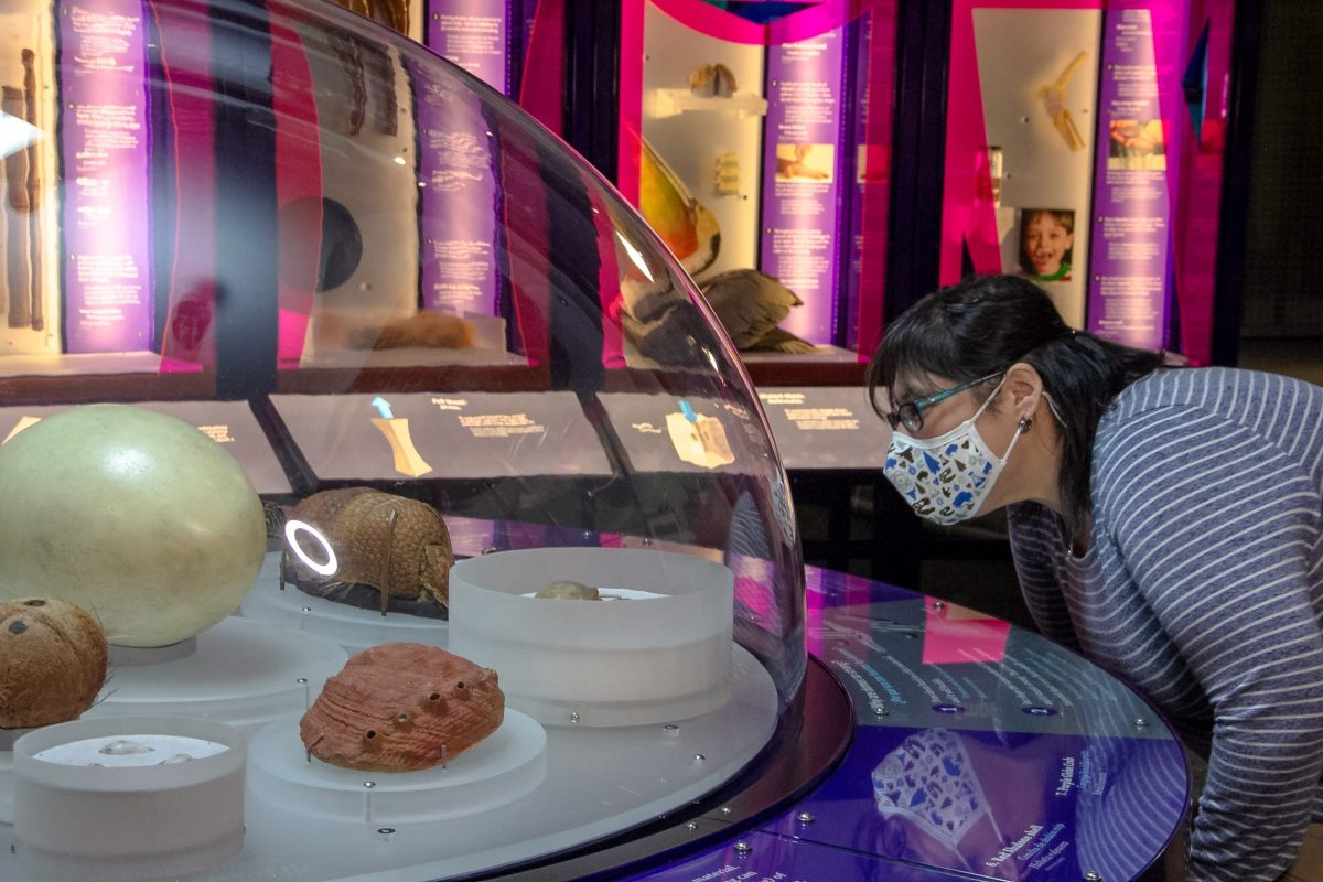 The Machine Inside: Biomechanics exhibition at the Witte Museum offers an interactive, multimodal look at the inner machinery of animal and plant bodies.