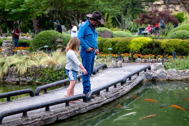 A man and young child check out the koi fish swimming in the pond at the Japanese Tea Garden.