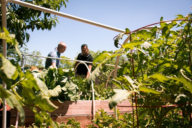 Jerry and Danny planted a variety of fruits and veggies in their backyard, including cabbage, spinach, tomatoes, and they are working on a grapevine.
