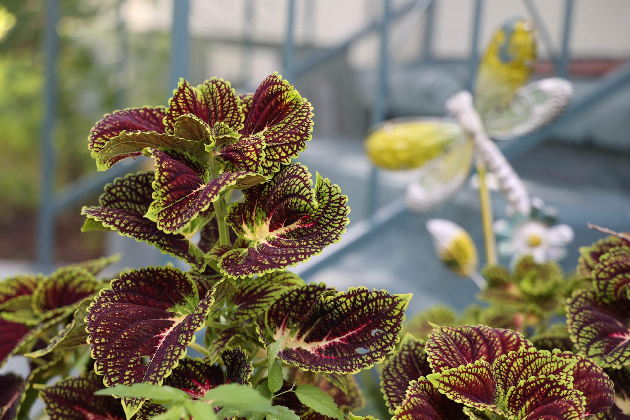 A unique looking plant grows in Baca's front garden.