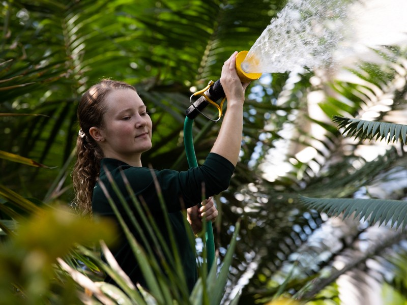 Chelsea Crisler, a senior conservatory gardener at the San Antonio Botanical Garden, waters large tropical plants inside the Lucille Halsell Conservatory.