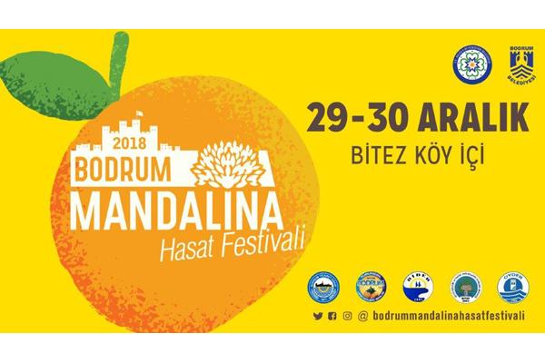 Bodrum Mandalinası Hasat Festivali