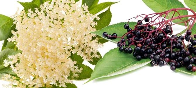 Fructele de soc – aromă, gust și comoară pentru sănătate