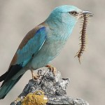Termoli – Lesina: Quando un uccello vale più dell'uomo.