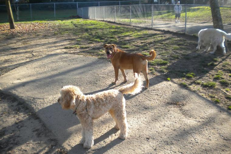 Improving our dog park by Ryan M.