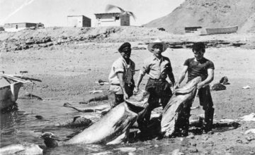 Early 20th century totoaba fishing