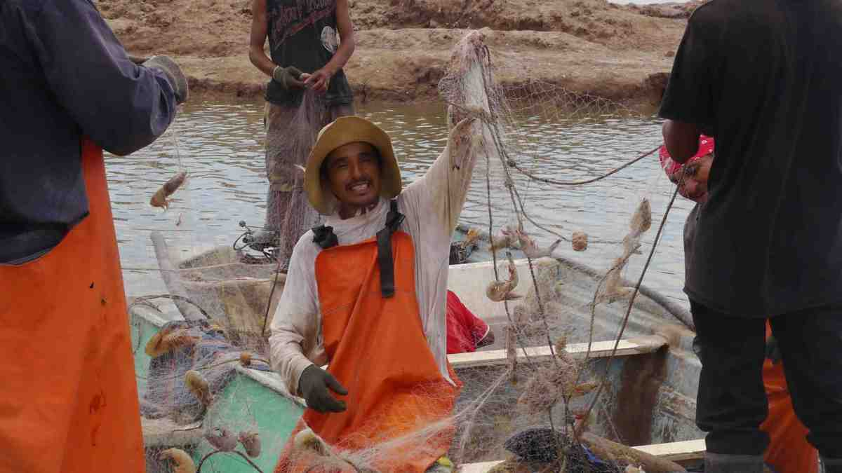 Shrimp Season Commences in Sonora