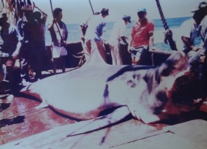 A dead great white shark lies on deck of commerical fishing boat close to San Pedro Martir