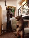 Iron Wood Bear Liberty