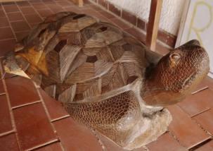 Iron wood turtle