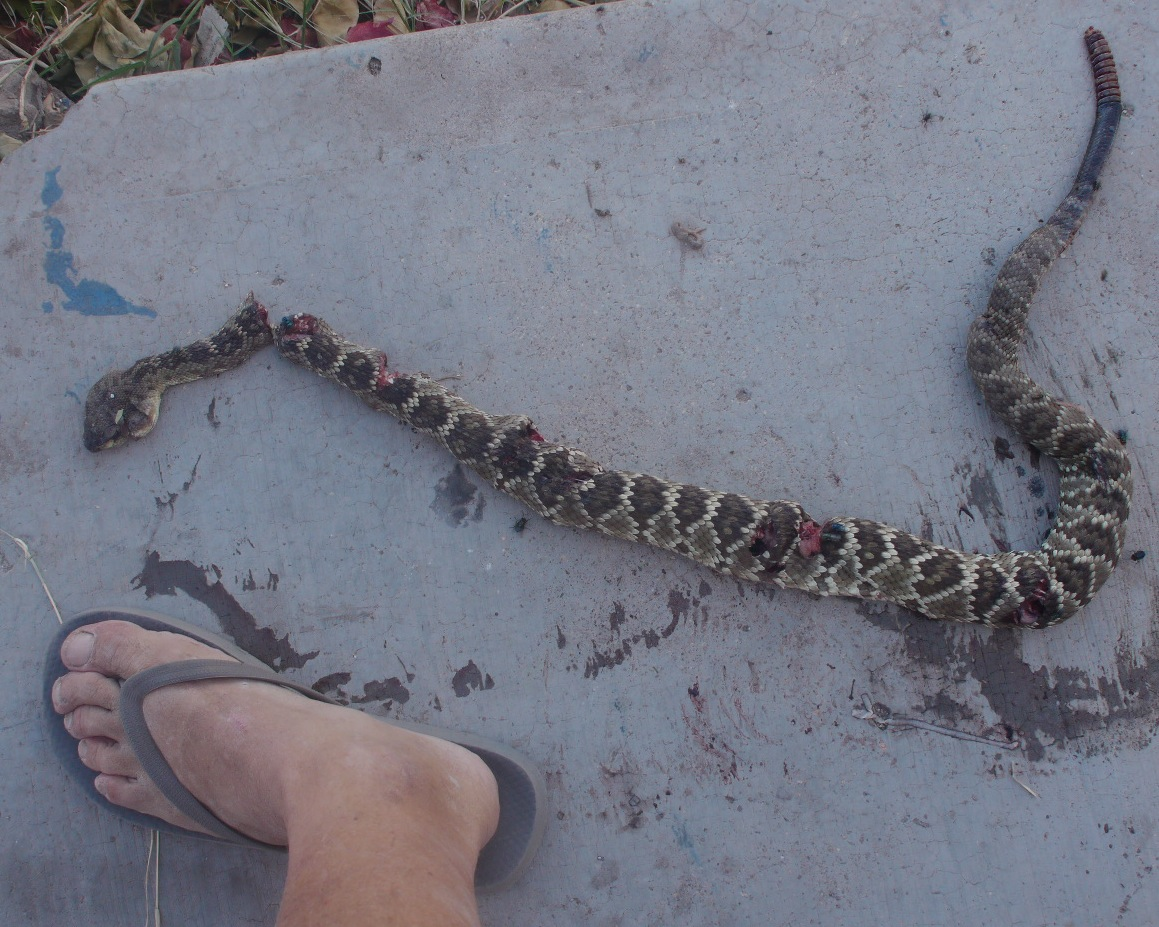 Snake Bite in La Bahia
