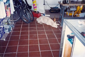 Poco the wonder dog @ Sonoran Sport Center circa 1993