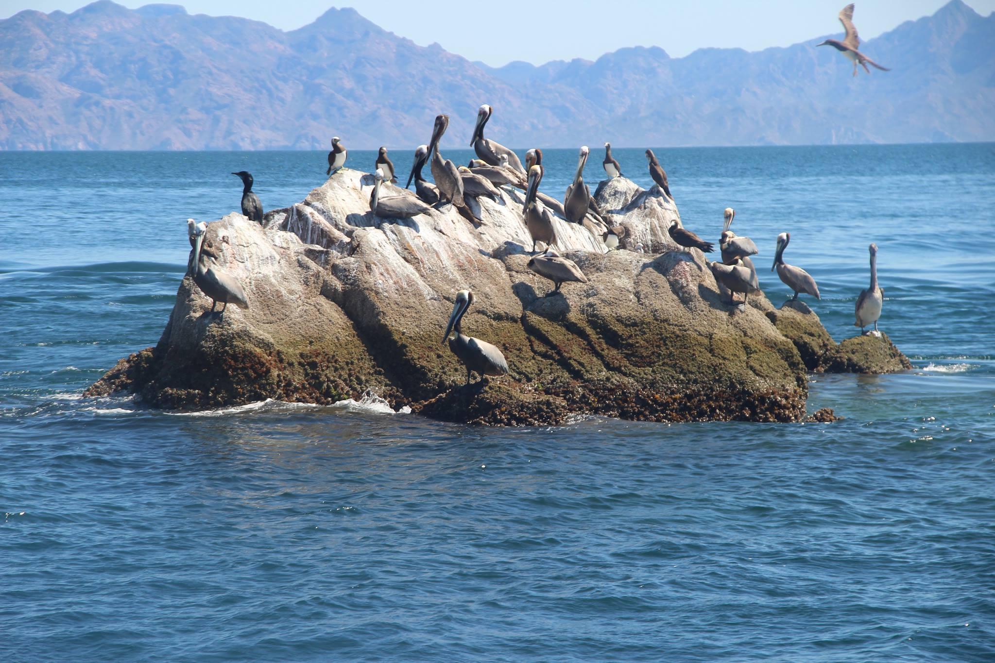 Photo Gallery San Carlos Fishing Charter