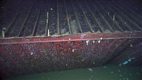 MBARI and Sanctuary Scientists to visit Lost Shipping Container and Deep Sea Corals: June 5-9, 2014
