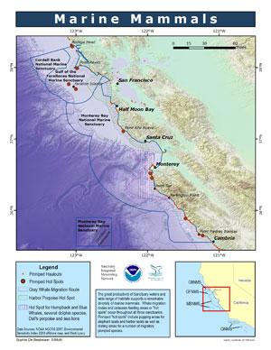 Marine Mammals map