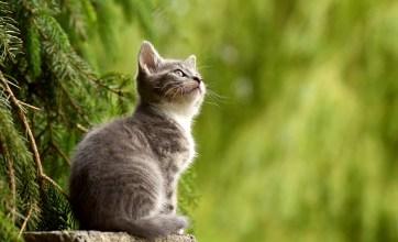 Sanctuary SOS - Cute Cat Enjoying The Outdoors