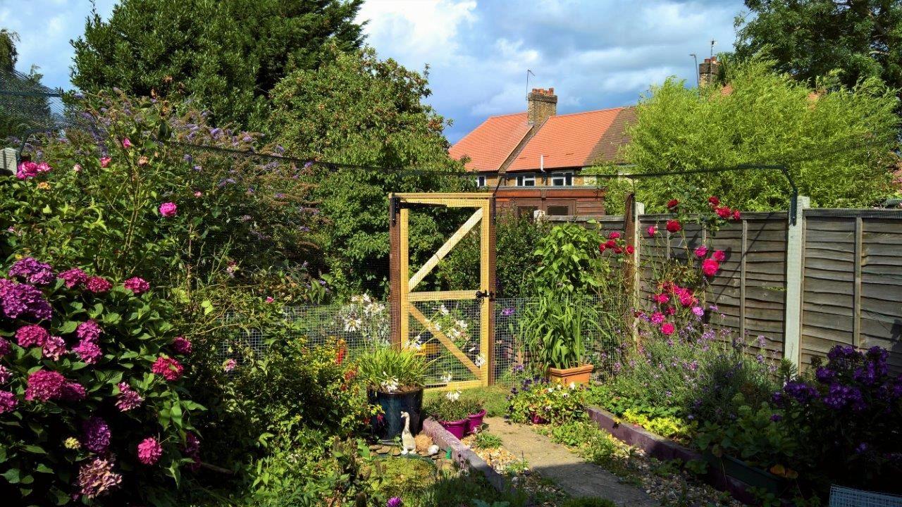 Cat safe garden