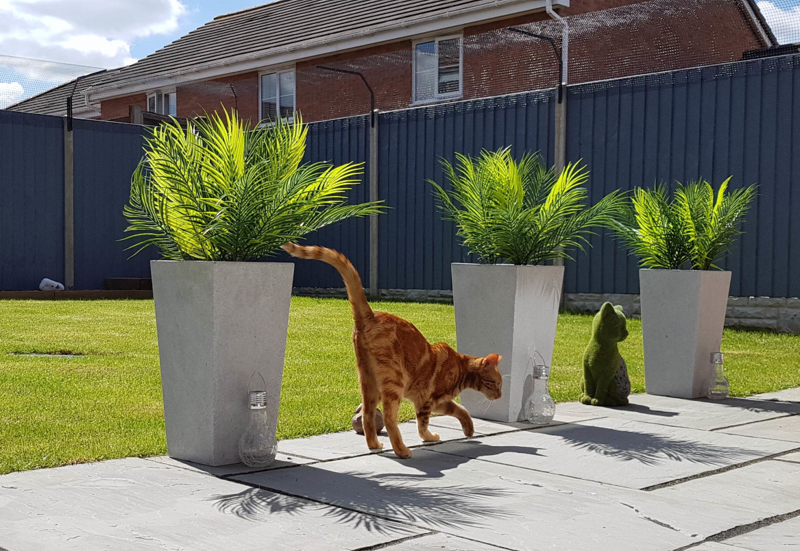 Cat proof garden - Sanctuary SOS