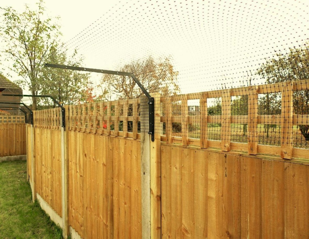 Agile breed cat fencing