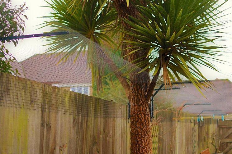 Cat fence around tree