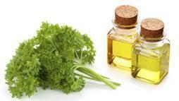 Parsley Essential Oil-10mls-((Petroselinum sativum/crispum – Umbelliferae)