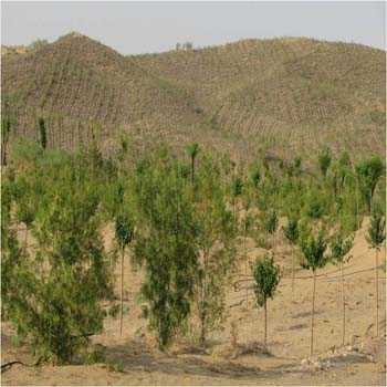 Desert Cultivation, Irrigation Farming in the Desert