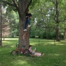 Tree School