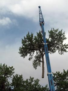crane hazard removal