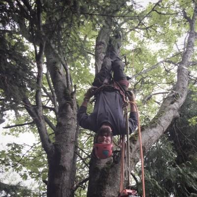 Jeremiah hangs upside down in a tree