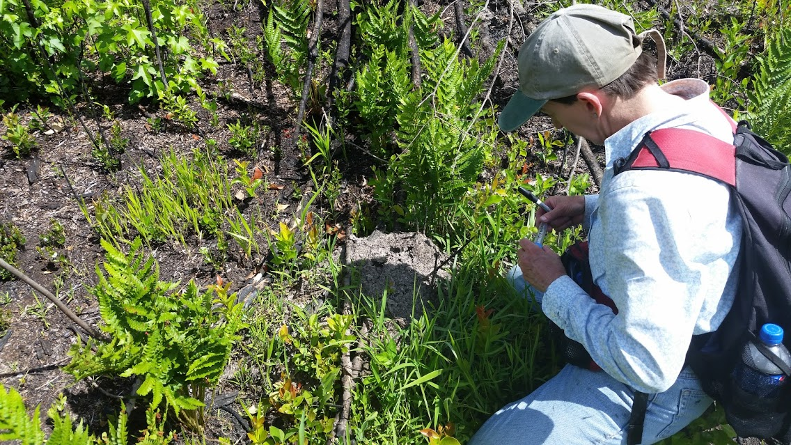 fire_ant_kelly_sampling