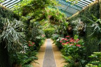A corridor full of green tropic plants