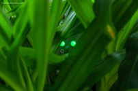 Two tiny electric green eyes behind the plants show the roof opener