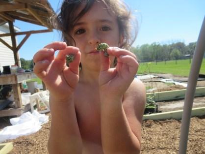 Wriggly caterpillars