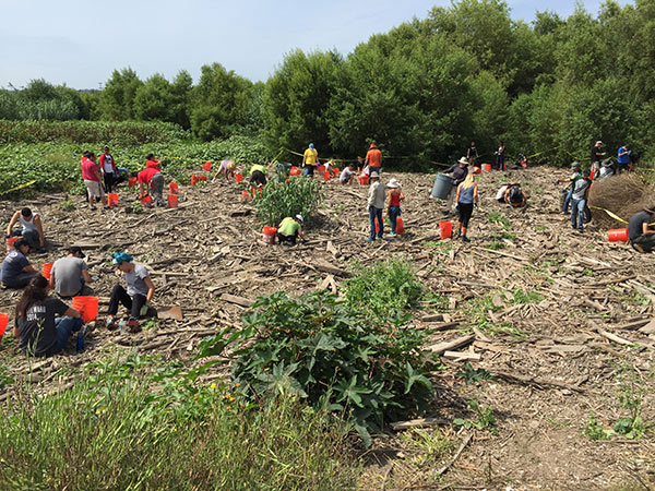 Towards the end of the cleanup - volunteers hard at work.