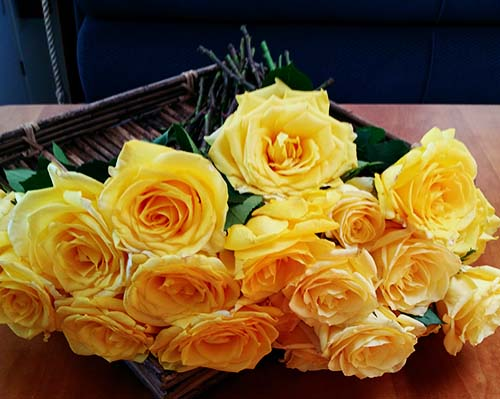 Dozen Roses for burial at sea scattering