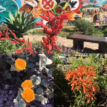 Collage of scenes from Chicano Park Herb Garden