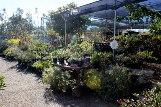 City Farmers Nursery plants