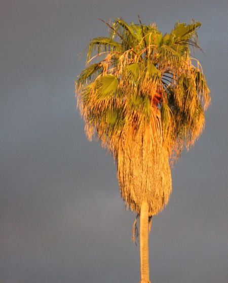 palm tree by day
