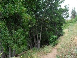 trail balboa