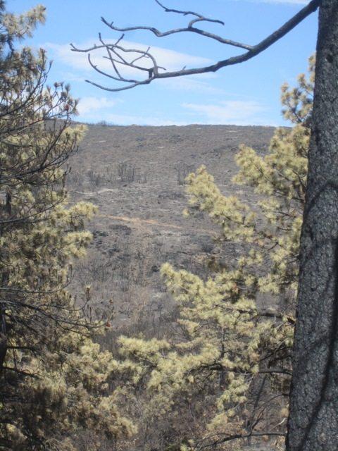 Laguna burn 8-2-13 Hill