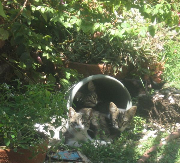 kittens in a flower pot