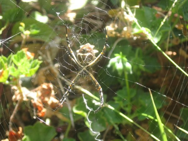 spider 2 side yard_2013